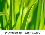 sprouts leaves. floral patterns.... | Shutterstock . vector #135466292