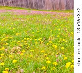 Meadow of spring wild flowers against wooden fence. selective focus - stock photo