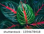 tropical leaf  lush foliage in... | Shutterstock . vector #1354678418