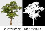 single tree on transparent... | Shutterstock . vector #1354794815