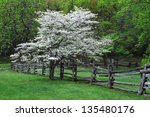 Dogwood tree at humpback rock...