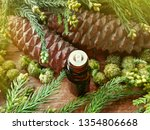 wood scents fir pine or spruce...   Shutterstock . vector #1354806668