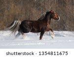 brown draft horse runs trot in... | Shutterstock . vector #1354811675
