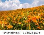 every september  holmerocallis... | Shutterstock . vector #1355261675