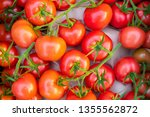 freshly picked red tomatos... | Shutterstock . vector #1355562872