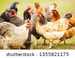 chickens in the garden. close... | Shutterstock . vector #1355821175