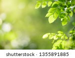 closeup nature view of green... | Shutterstock . vector #1355891885