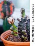 close up flower of... | Shutterstock . vector #1356203978