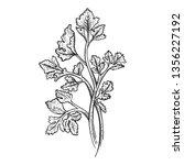 cilantro coriander parsley... | Shutterstock .eps vector #1356227192