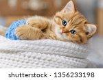 little striped kitten playing... | Shutterstock . vector #1356233198
