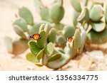 Butterfly On The Cactus