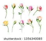 set of different roses on a... | Shutterstock . vector #1356340085