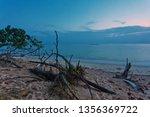 ld wood snag on tropical beach ... | Shutterstock . vector #1356369722