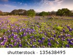 Bluebonnets Covering A Rural...