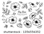 collection set of dog rose... | Shutterstock .eps vector #1356556352