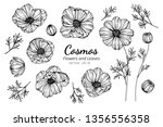 collection set of cosmos flower ... | Shutterstock .eps vector #1356556358