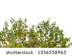 colourful leaves of tree... | Shutterstock . vector #1356558965