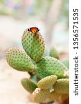 Bright Butterfly On A Cactus