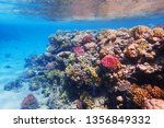 coral reef in egypt as nice... | Shutterstock . vector #1356849332