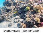 coral reef in egypt as nice... | Shutterstock . vector #1356849335