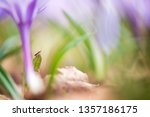 Assassin Bug And Spring...