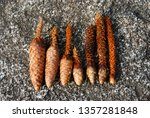 Pine Cones Crunched By...