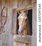 Palomino Horse In Barn