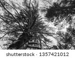 black and white photo looking... | Shutterstock . vector #1357421012