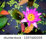 pink waterlily or lotus flower... | Shutterstock . vector #1357600205