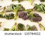 nettle leaves | Shutterstock . vector #135784022