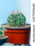 close up image of cactus in... | Shutterstock . vector #1357929668