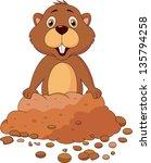 cute groundhog cartoon   Shutterstock .eps vector #135794258