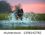 direct view on rescue dog in... | Shutterstock . vector #1358142782