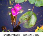 pink waterlily or lotus flower... | Shutterstock . vector #1358210102