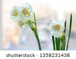 blooming daffodils on the... | Shutterstock . vector #1358231438