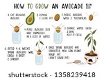 how to grow an avocado from... | Shutterstock .eps vector #1358239418