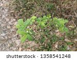 green plants in forest on ground | Shutterstock . vector #1358541248