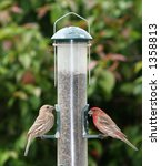 two finches feeding from bird... | Shutterstock . vector #1358813