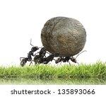 teamwork  team of ants rolls...   Shutterstock . vector #135893066