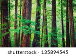 Redwood Trees In Forest ...