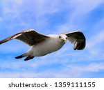 Seagull In Flight Against A...
