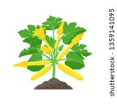 yellow zucchini plant with...   Shutterstock .eps vector #1359141095