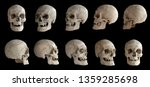 Human anatomy. human skull....
