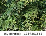 background of green branches of ... | Shutterstock . vector #1359361568