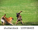 Stock photo catch me if you can 135938405