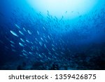 Stock photo school of blue indian mackerel underwater along the dive site main marine life resources under the 1359426875