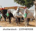 Horses From The Pushkar Mela A...