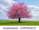 Flowering Tree Of Japanese...