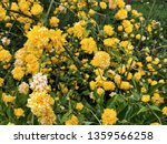 natural background with yellow... | Shutterstock . vector #1359566258