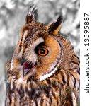 owl with big ears | Shutterstock . vector #13595887
